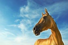 3 guld- häst turkmenistan Arkivfoton
