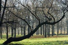 3 hösttrees Fotografering för Bildbyråer