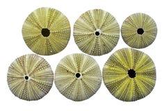 3 havsskelettgatubarn Arkivfoton
