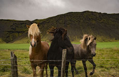 3 Horses on Green Grass Near Mountain Stock Photo