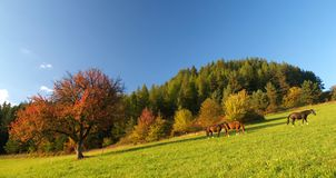 3 Horses and Red tree. Three horses taking walk on meadow Royalty Free Stock Image