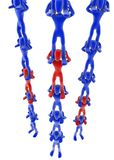 3 Human Ladders. Multiple blue and red 3d figures forming 3 ladders Royalty Free Stock Image