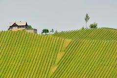 3 ingen vingård Arkivfoton