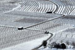 3 ingen vingårdvinter Arkivfoton
