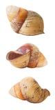 3 isolerade snäckskalsikter Arkivbild