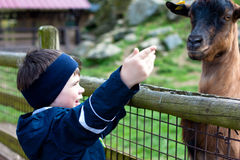 3 jaar jongens die een geit voedt Royalty-vrije Stock Afbeelding