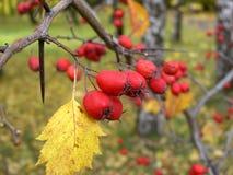 3 jesieni zdjęcia stock