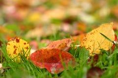 3 jesiennych liści Fotografia Stock