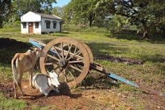 3 karnataka wiejski Zdjęcie Royalty Free