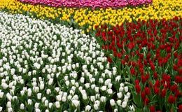 3 kolorowy flowerbed Obraz Royalty Free