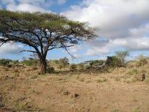 3 krajobraz Kenya Obrazy Royalty Free