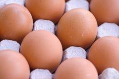 3 kurczaków jajeczna mania Fotografia Stock