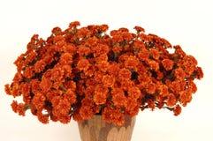 3 kwiat Zdjęcia Royalty Free