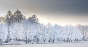 3 lasów zima Obrazy Stock