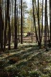 3 lasowego mały Obrazy Royalty Free