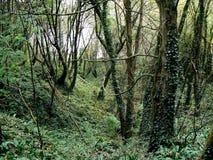 3 lasowego tajemniczy Zdjęcie Stock