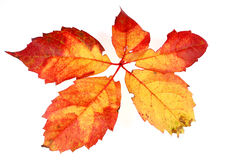 3 leaves arkivfoton