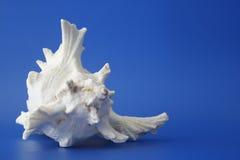3 mój seashell Fotografia Royalty Free