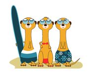 3 Meercat Surfers Royalty Free Stock Photography