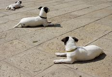 3 for a nap. Three dogs laying down Royalty Free Stock Photos