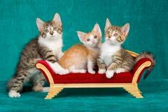 3 nette Kätzchen auf Minisofa stockfotografie
