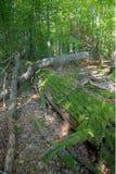 3 nieżywy drzewo Fotografia Royalty Free