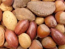 3 nuts раковины Стоковые Изображения RF