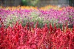 3 ogród Zdjęcie Stock