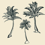 3 palm trees illustration Royalty Free Stock Images