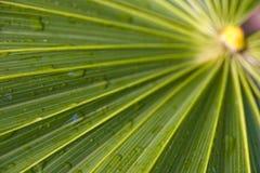 3 palma frond obraz stock