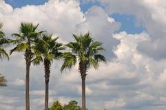 3 Palmen lizenzfreie stockbilder