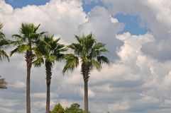 3 Palms Royalty Free Stock Images
