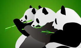 3 Panda Royalty Free Stock Images