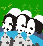 3 panda's stock illustratie