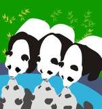 3 Pandas Stock Image