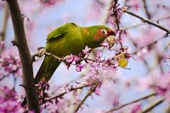 3 papegojor Arkivbild
