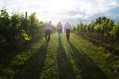 3 Person Walking on Green Grass Between Green Plants at Sunrise Stock Photography