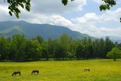 3 Pferde, die auf dem Gebiet weiden lassen Stockbilder