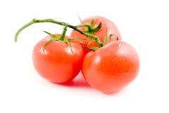 3 pomodori Fotografia Stock