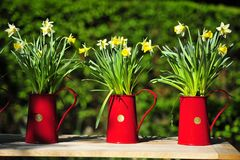 3 pots of flowers Royalty Free Stock Photos