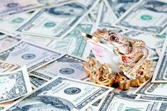 3 przeciw dolarom iść na piechotę pieniądze kumaka Zdjęcie Royalty Free