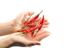 3 röda chilir Royaltyfria Bilder