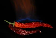 3 röda varma peppar för chili Royaltyfri Fotografi