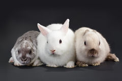 3 Rabbit baby Stock Image