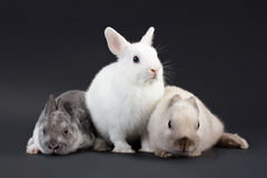 3 Rabbit baby Stock Photo