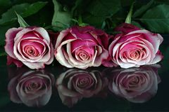 3 Red Roses Stock Images