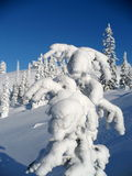 3 reindeer 免版税图库摄影