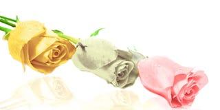 3 rose Immagine Stock