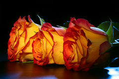 3 rose arancioni su una tabella. Fotografie Stock