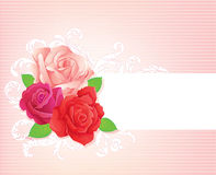 3 roses. Banner, vector illustration Royalty Free Stock Image